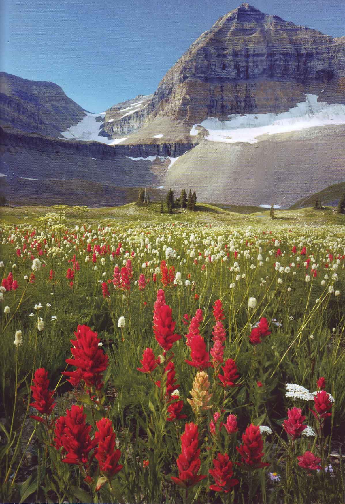 Scott smith photography utah Download Adobe Photodeluxe Home Edition 4.0 - MajorGeeks